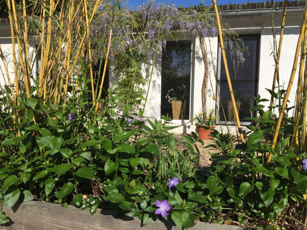 Bambus und Blauregen an Shivas Garten